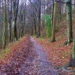 One25 walks - LDWA