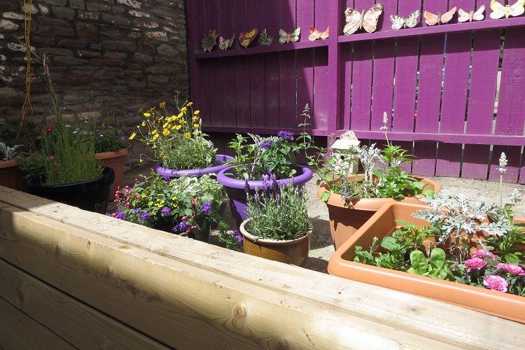 plants in the drop-in garden